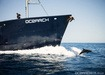 AUS OCEARCH IMAGE 7 dolphin ship