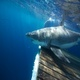 Costa Ocearch Wanna Tagalong Video